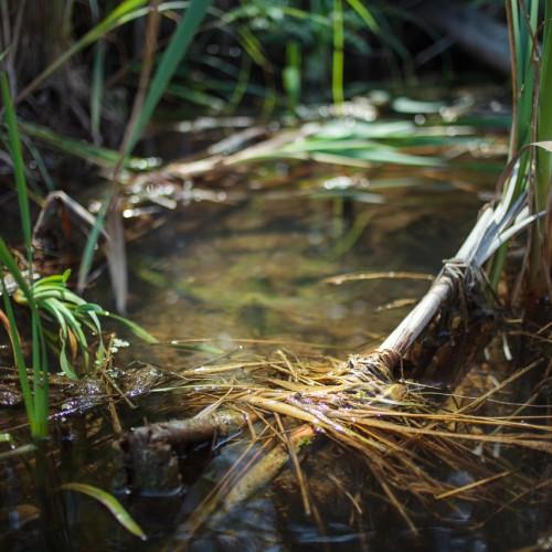 Grass Pool