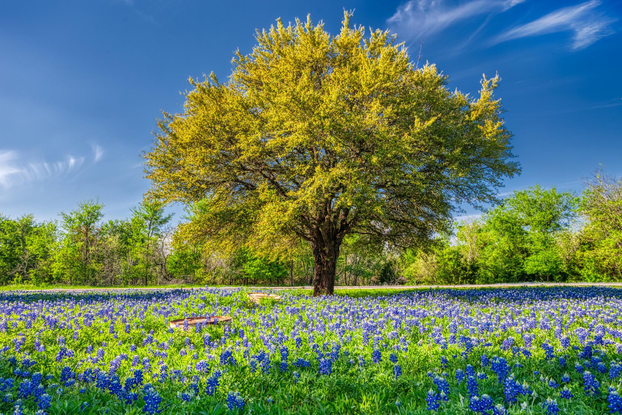 McKinney Falls: Where to Take Photos in Austin's State Park