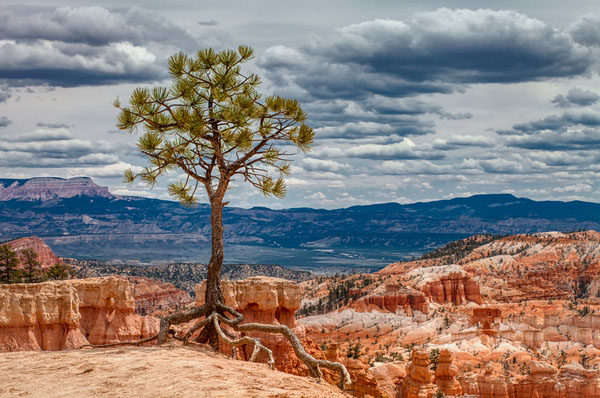 Bryce Canyon National Park: Taking Photos of Utah's Hoodoos, by Wildsight Photography. Queens Garden Trail