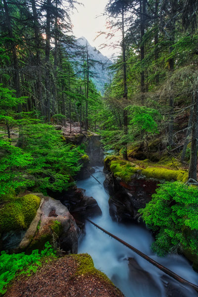 Glacier National Park: Our Favorite Easy to Access Photo Spots by Wildsight Photography. Avalanche Creek, Montana