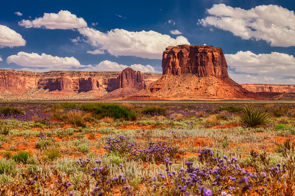 Monument Valley: Best Photo Spots of the Southwest Wonder by Wildsight Photography. desert wildflowers