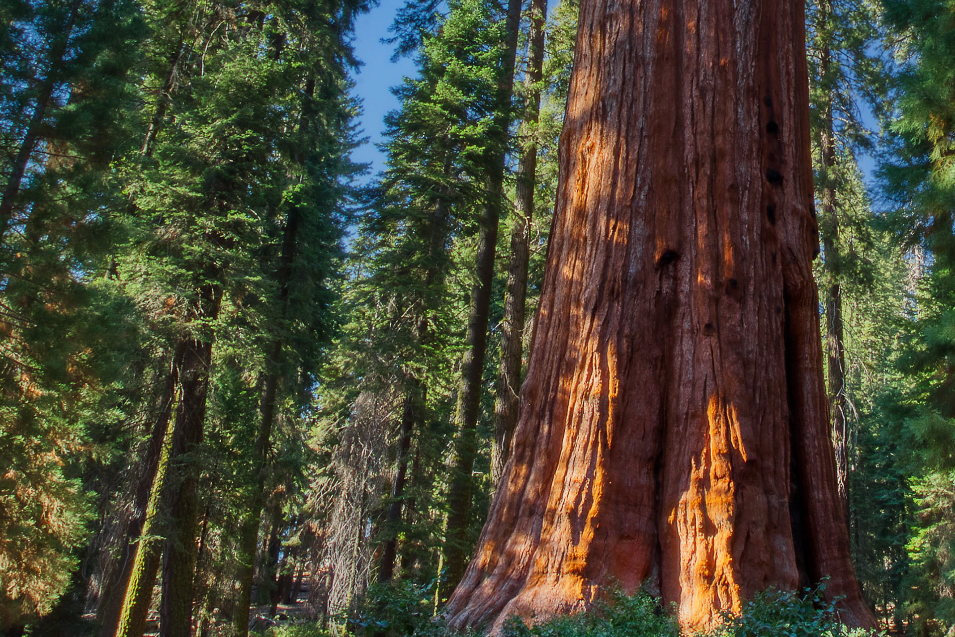 Sequoia National Park: Photographing the World's Largest Trees